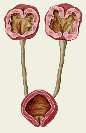паразиты в почках человека симптомы