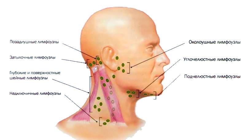 лимфоузлна волосистой части головы