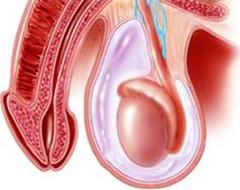 паразиты мочеполовой системы человека актуальность