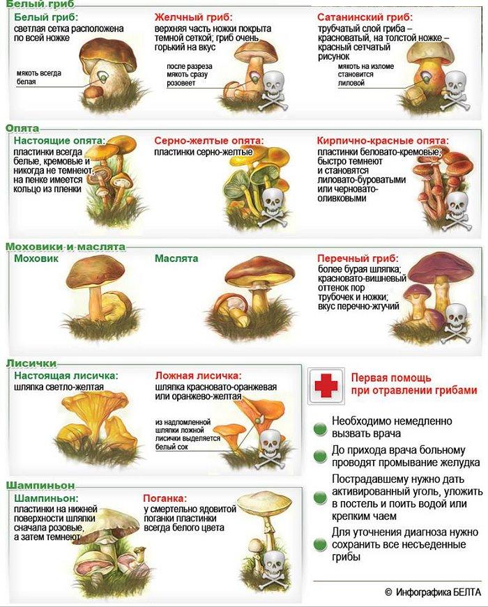 паразиты глисты в организме человека симптомы