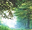 Какой лес полезен