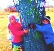 Силу дают деревья